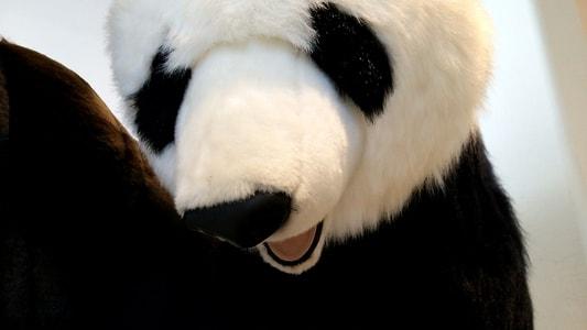 ららぽーと名古屋 蔦屋書店のパンダ