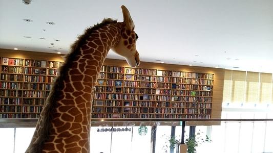 ららぽーと名古屋 蔦屋書店のキリン