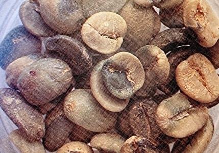 カビ豆 カビ臭豆