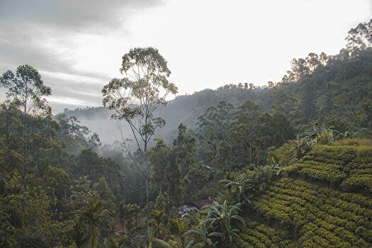 標高の高い場所にあるコーヒー農園